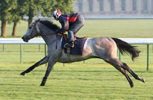 Natagora, by Divine Light, training in Chantilly
