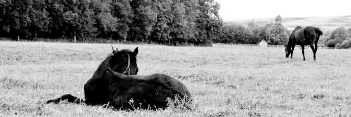 Haras de Lonray Aksil foal et Nera Zilzal